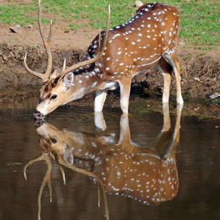 Rajasthan Wildlife